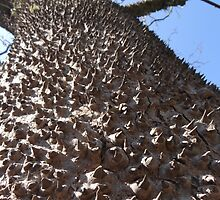 Tree like a little biotope by Bernhard Matejka