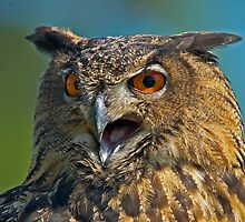 SCREECH, SCREECH SAID THE EAGLE OWL by imagetj
