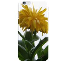 i Yellow Chrysanthemum II iPhone Case/Skin