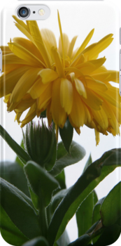 i Yellow Chrysanthemum II by Gary L   Suddath