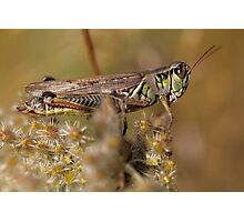 Hopper 2 Photographic Print