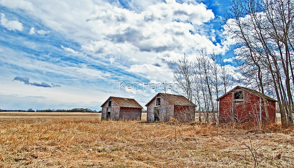 Three Sheds by Keri Harrish