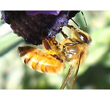 Sweet Nectar Photographic Print