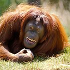 orangutan in the grass by Garry Gay