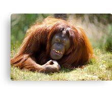 orangutan in the grass Canvas Print