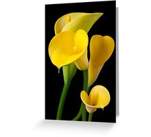 Four yellow calla lilies Greeting Card