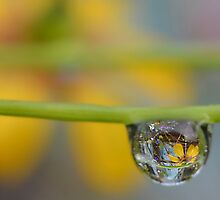Flowers in Dew by relayer51