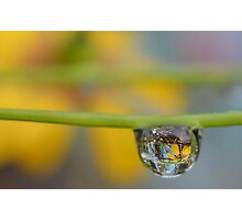 Flowers in Dew Photographic Print