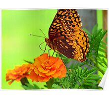 Butterfly on Marigold Poster