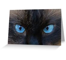 Maliboo...a blue eye'd cutie Greeting Card