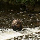 Where are all the salmon? by SusanAdey