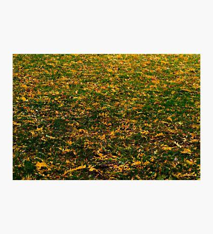 Autumn's Carpet Photographic Print