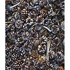 Pine cones on the ground by Tim McGuire