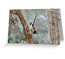 Grey Fantail diving to the ground Greeting Card
