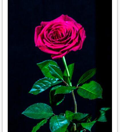 A Single Pink Rose Sticker