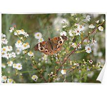 Autumn Wings - Common Buckeye 4 Poster