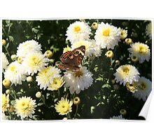 Autumn Wings - Common Buckeye 2 Poster