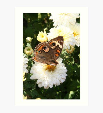 Autumn Wings - Common Buckeye 1 Art Print