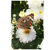 Autumn Wings - Common Buckeye 1 Poster