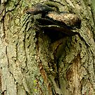 An Eagle ...............  by Larry Llewellyn