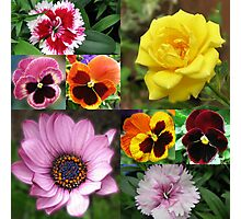 Sunkissed Summer Flowers Collage - Unframed Photographic Print