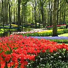 A Kaleidoscope of Colours - Keukenhof Gardens in Spring by BlueMoonRose