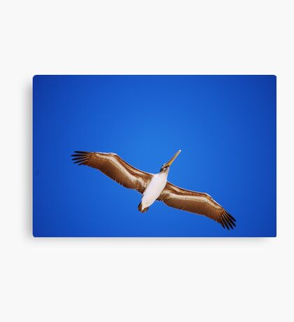 Flying Model Canvas Print