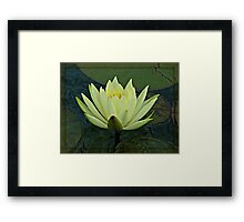 Lemon Water Lily in Low Light Framed Print