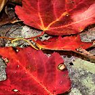 Red Leaf Trio by debidabble