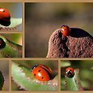 A LADYBUG'S JOURNEY TO THE TOP by Betsy  Seeton