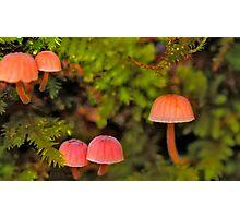 5 little moss mushrooms Photographic Print