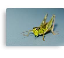 Small grasshopper Canvas Print