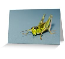 Small grasshopper Greeting Card