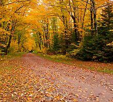 Yellow fall Driveway by JohnDSmith