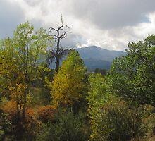 Pulpit Rock Park in Colorado Springs by dfrahm