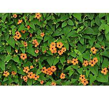 Orange Flowers on a Green Plant Photographic Print