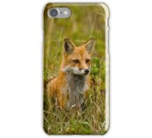Red Fox In Field iPhone Case/Skin