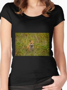 Red Fox In Field Women's Fitted Scoop T-Shirt