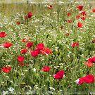 summer meadow by Teresa Pople