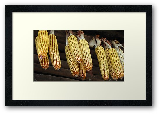 Corn 2011 - Two by branko stanic