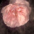 Fullness in Bloom by Lozzar Flowers & Art