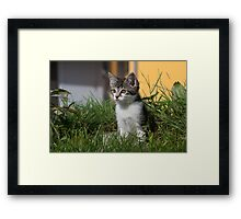Sweet Kitten Framed Print