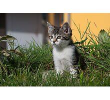 Sweet Kitten Photographic Print