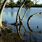 Mangroves on Broughton Creek by waxyfrog