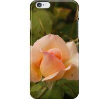 tasmanian rose iPhone Case/Skin