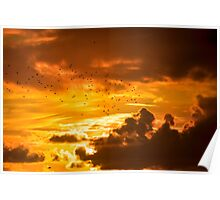 flocks of starlings flying into a sunset Poster