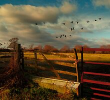 Wild Geese by ajgosling