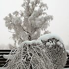 Nordic winter magic by Marek Nõlvak