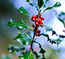 Holly Sprig, JFK Arboretum, New Ross, County Wexford by Andrew Jones