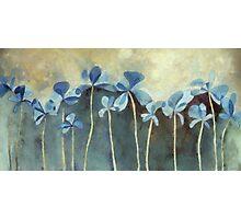 Blue Flowers Photographic Print